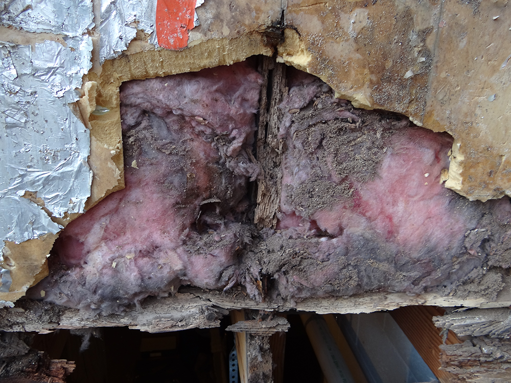 Siding-repairs-(5)
